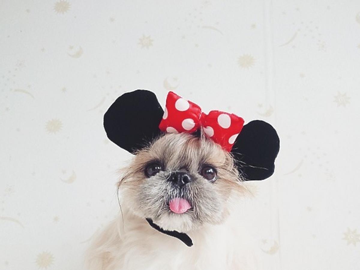 Najsłodszy szczeniak na Instagramie @moem_n