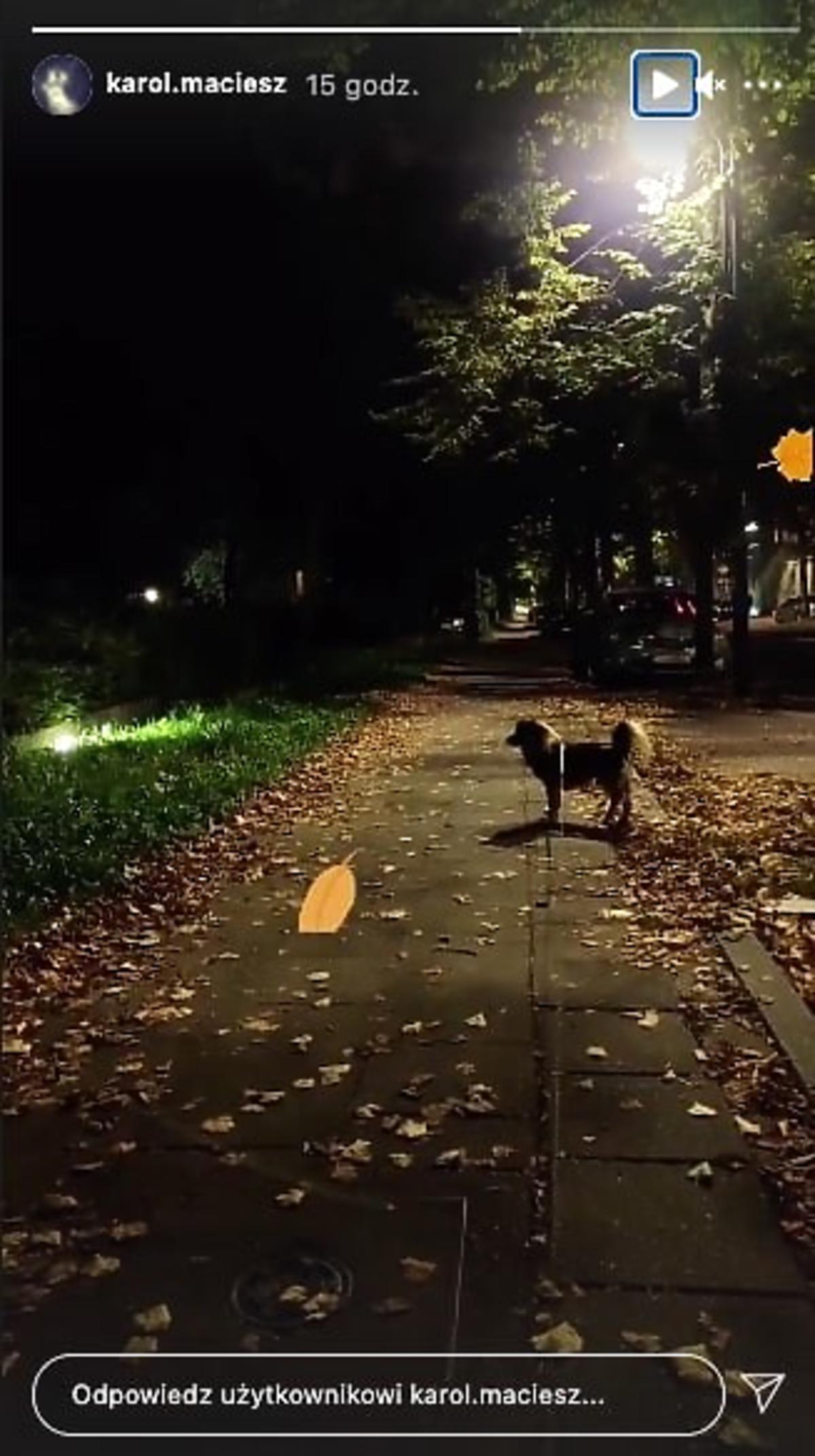 Ślub od pierwszego wejrzenia: Karol wyprowadza psa Laury na spacer