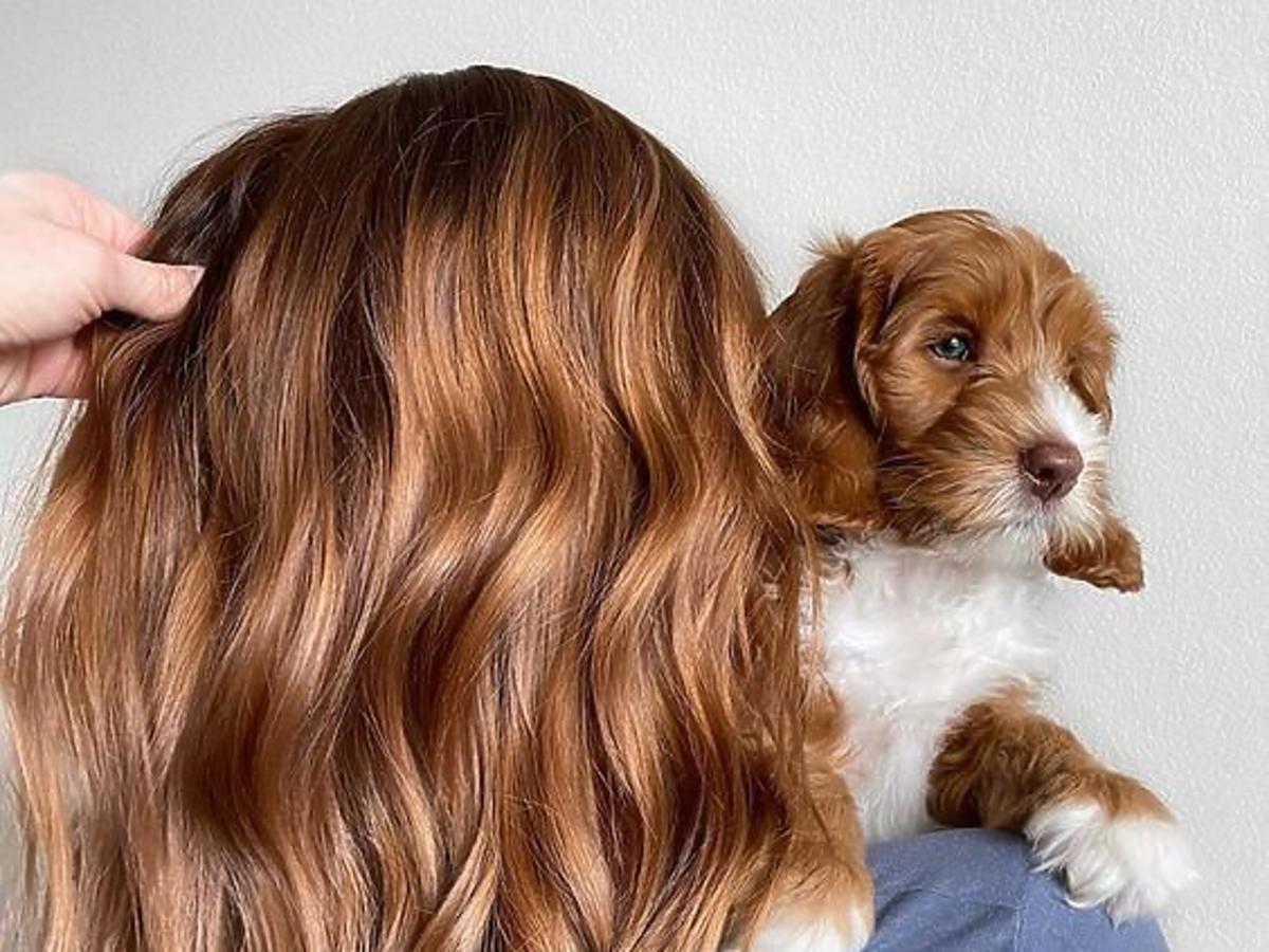 włosy po stosowaniu szamponu regenerującego