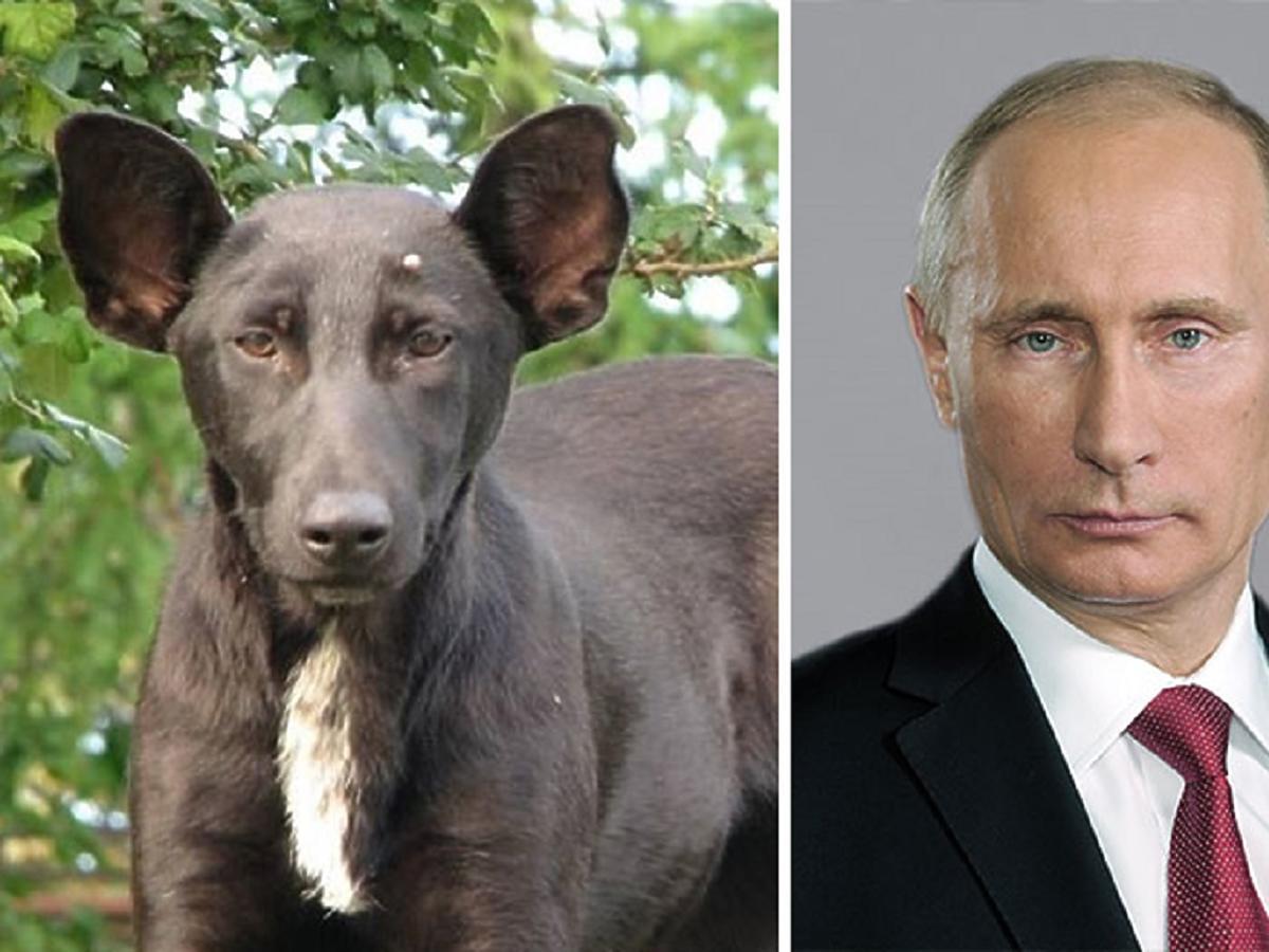 Zwierzaki, które wyglądają jak znani ludzie